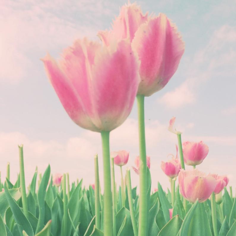 Verjaardagskaarten - twee  zachte tulpen