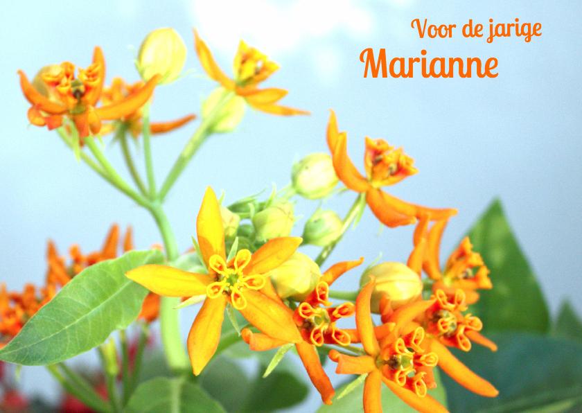 Verjaardagskaarten - Verjaardag bloemen oranje&blauw