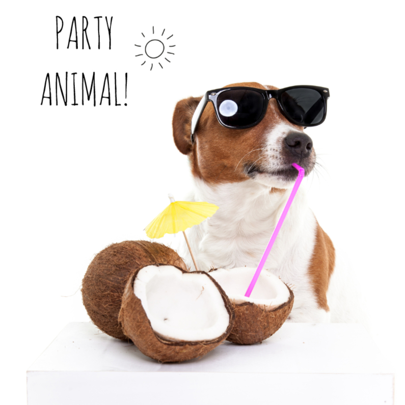 Verjaardagskaarten - Verjaardag - Boris de hond - Party Animal