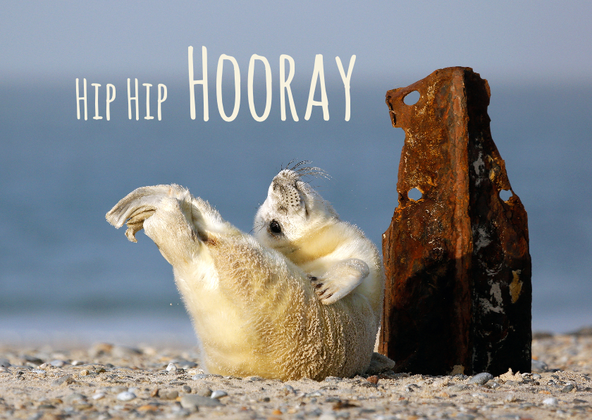 Verjaardagskaarten - Verjaardagskaart met blije jonge zeehond