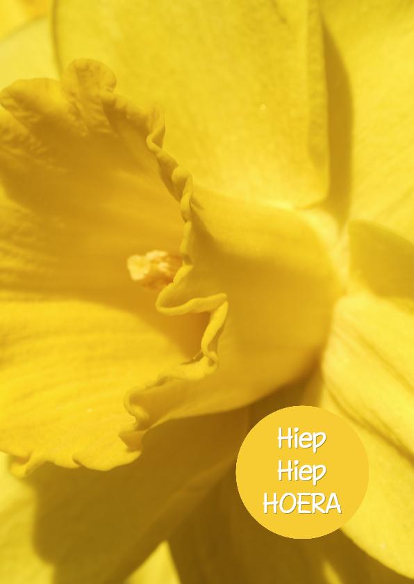 Verjaardagskaarten - Verjaardagskaart Narcis - OTTI