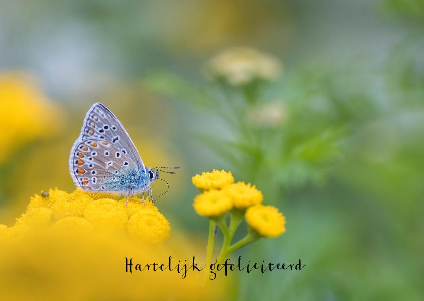 Verjaardagskaarten - Verjaardagskaart vlinder op gele bloemen