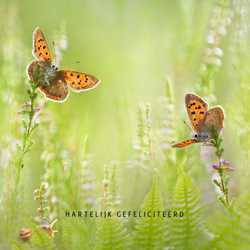 Verjaardagskaarten - Verjaardagskaart vlinders in de zomer