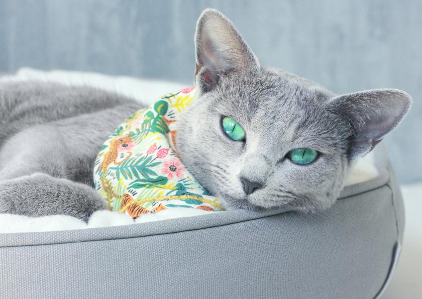 Verjaardagskaarten - Verjaardagskat met grijze kat met groene ogen en bandana