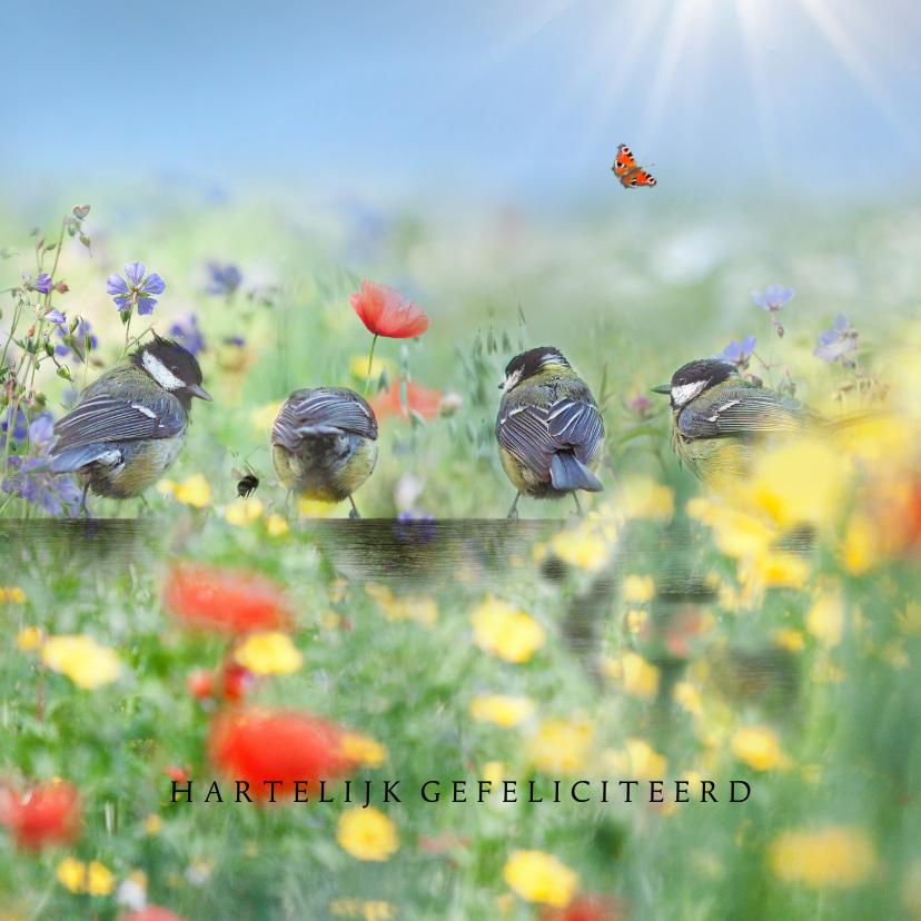 Verjaardagskaarten - Vrolijke zomer met vogels