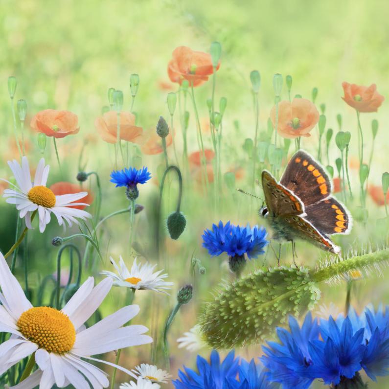 Verjaardagskaarten - Weidebloemen met vlinder