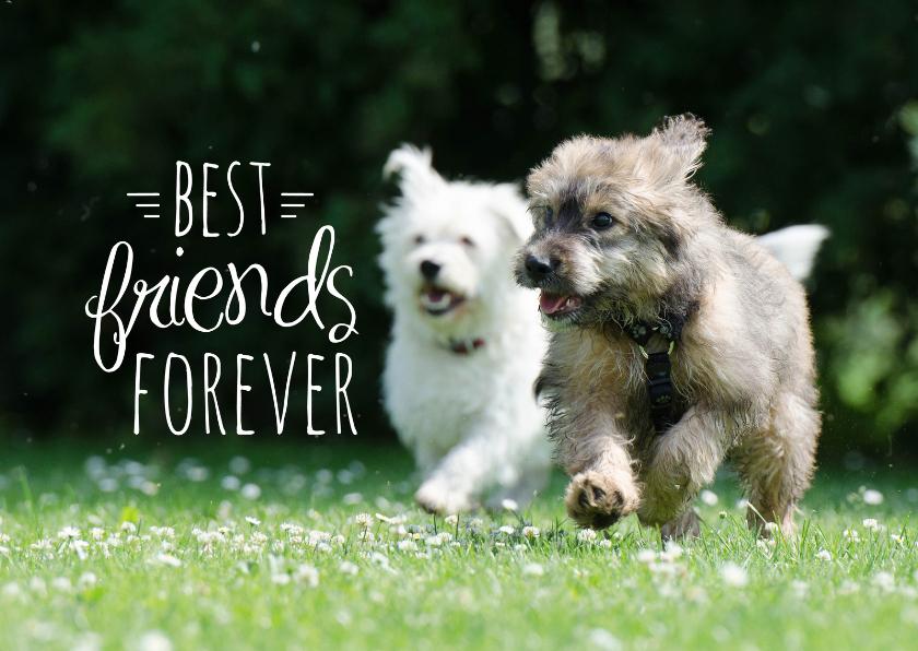Vriendschap kaarten - Dieren honden vriendschap