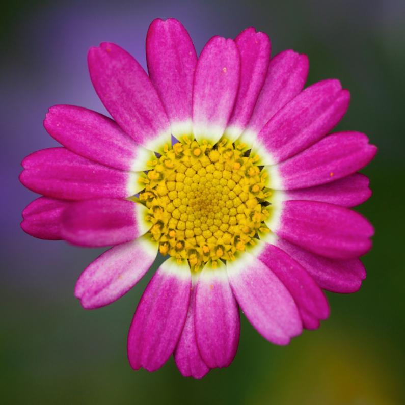 Zomaar kaarten - close up bloem