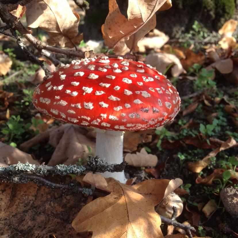 Zomaar kaarten - Herfst Paddestoel rood met witte stippen