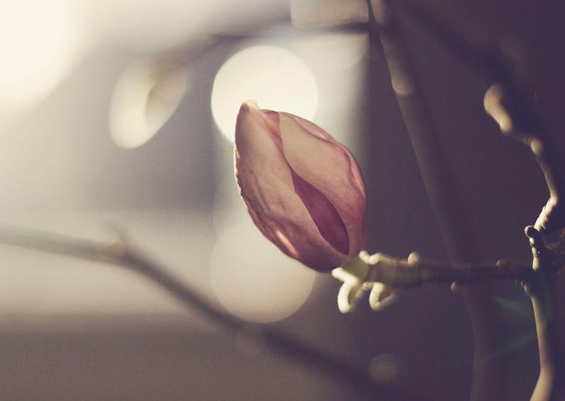 Zomaar kaarten - Kaart Magnolia