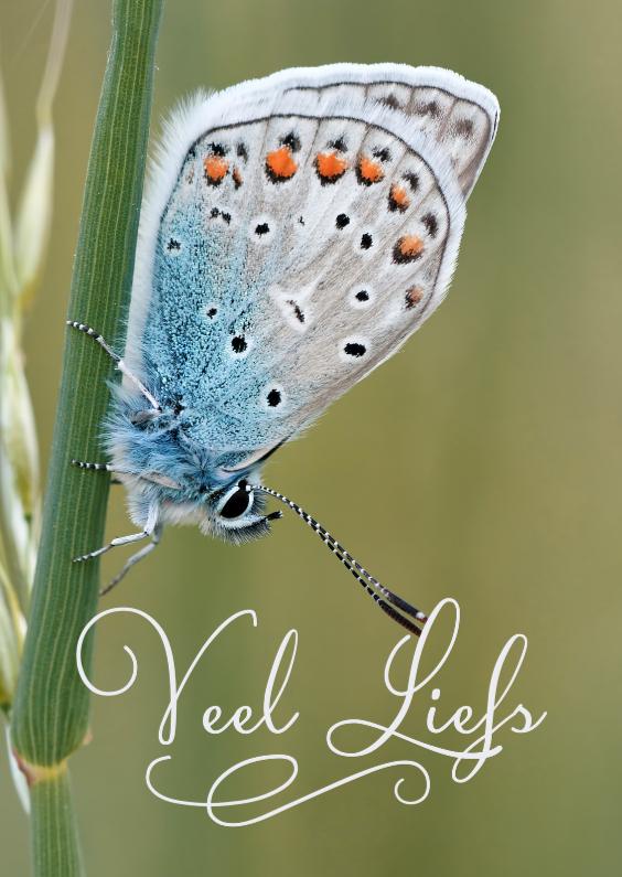 Zomaar kaarten - Veel liefs met vlinder