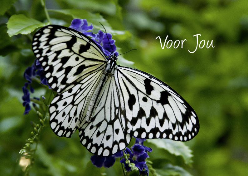 Zomaar kaarten - Zomaar voor jou met vlinder